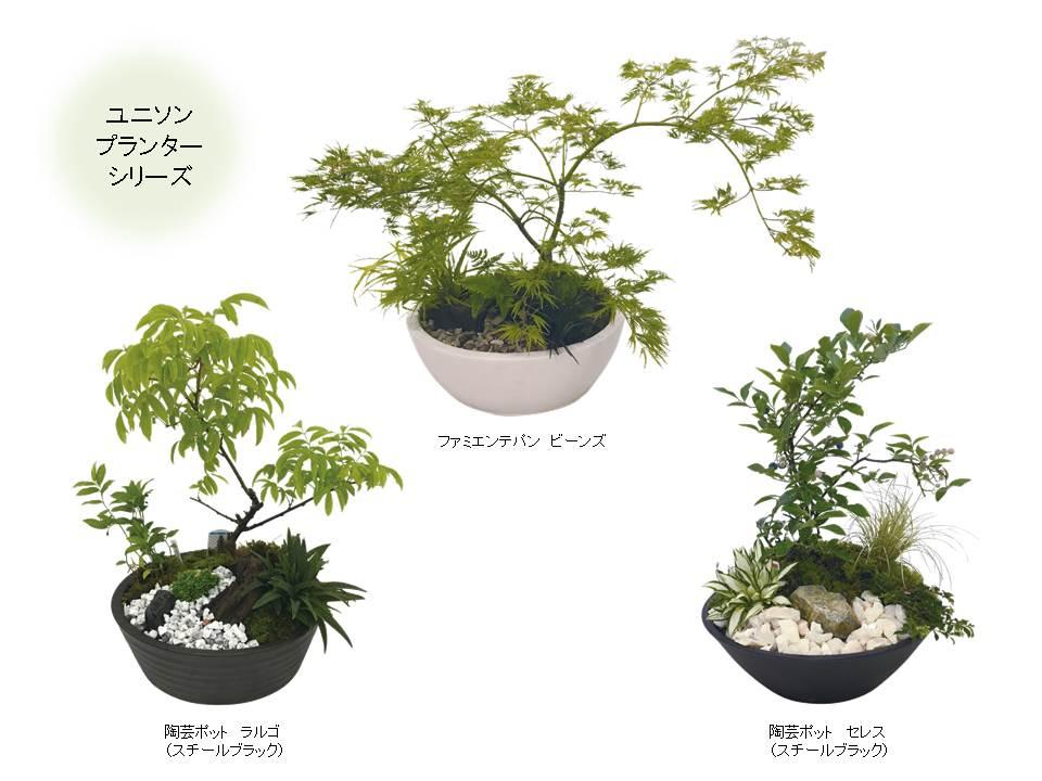 小さな雑木の庭づくりに挑戦!